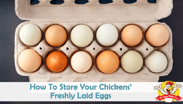 How To Store Your Chickens' Freshly Laid Eggs Blog Cover
