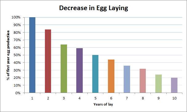 Chickens Egg Laying Reducing Over Time