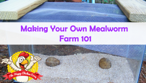 Making Your Own Mealworm Farm 101