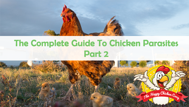 The Complete Guide To Chicken Parasites: Part 2