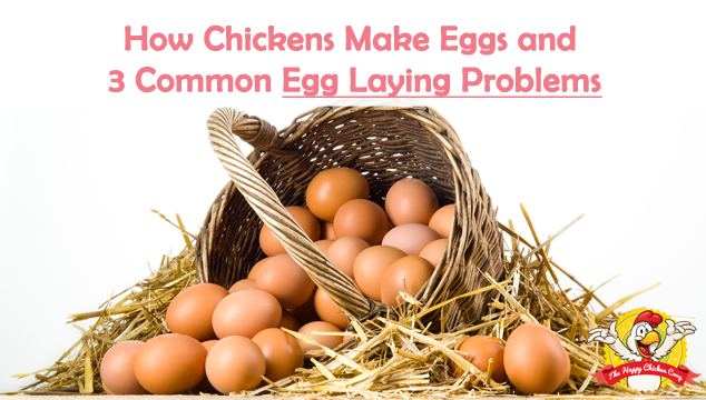 How Chickens Make Eggs and 3 Common Egg Laying Problems Blog Cover