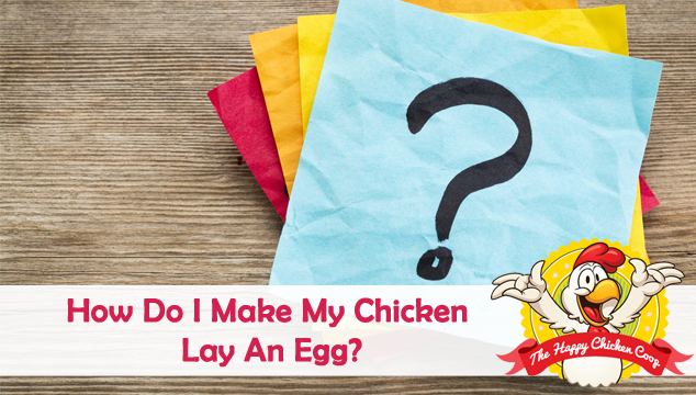 How Do I Make My Chicken Lay An Egg Blog Cover
