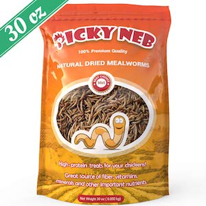 Mealworm Snacks for Hens