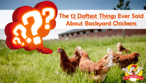 The 12 Daftest Things Ever Said About Backyard Chickens