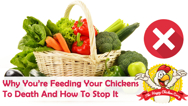 Why You're Feeding Your Chickens To Death And How To Stop It Blog Cover
