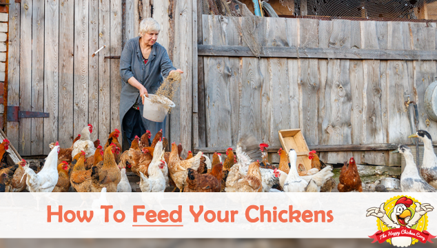 How To Feed Your Chickens
