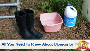 Biosecurity and Keeping Rodent Activity At A Minimum