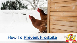 How To Prevent Frostbite During Winter?