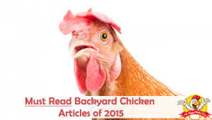 Top 10 Must Read Backyard Chicken Articles of 2015
