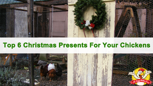 Top 6 Christmas Presents For Your Chickens Blog Cover