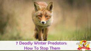 Top Winter Predators: How To Keep Your Flock Safe