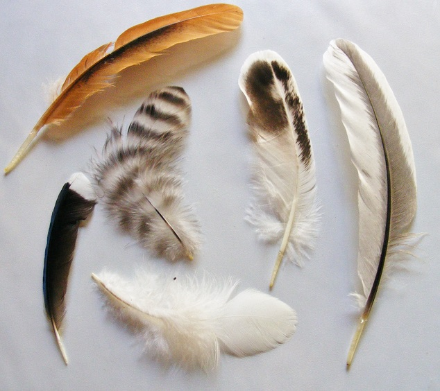 My Collection of Chicken Feathers