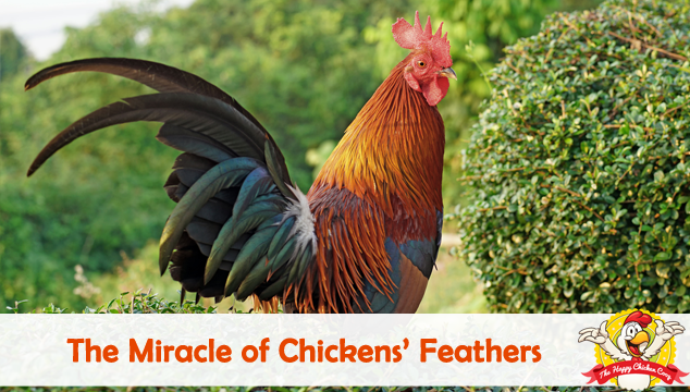 The Miracle of Chickens Feathers Blog Cover