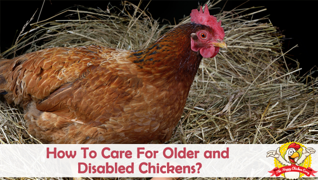 How To Care For Older and Disabled Chickens Blog Cover