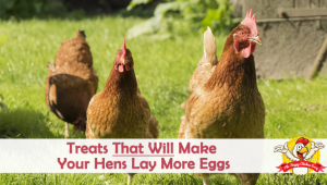 Treats That Will Make Your Hens Lay More Eggs
