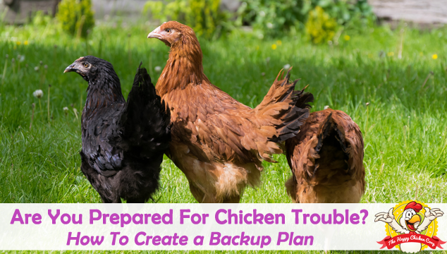 Are You Prepared For Chicken Trouble? How to Create a Backup Plan