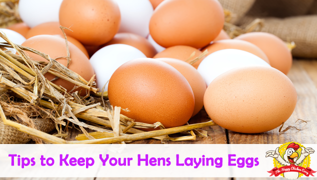 Tips to Keep Your Hens Laying Eggs Blog Cover