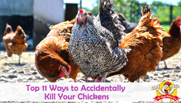 Top 11 Ways to Accidentally Kill Your Chickens Blog Cover