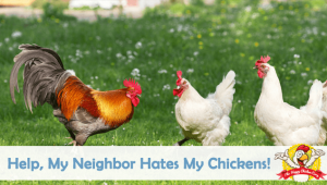 Help, My Neighbor Hates My Chickens!