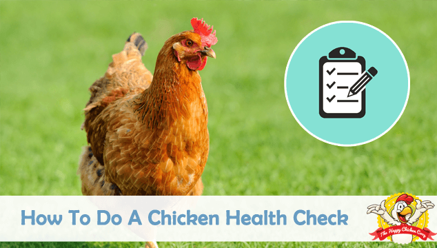 How To Do A Chicken Health Check Blog Cover