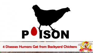 4 Diseases Humans Get from Backyard Chickens: Zoonotic Diseases