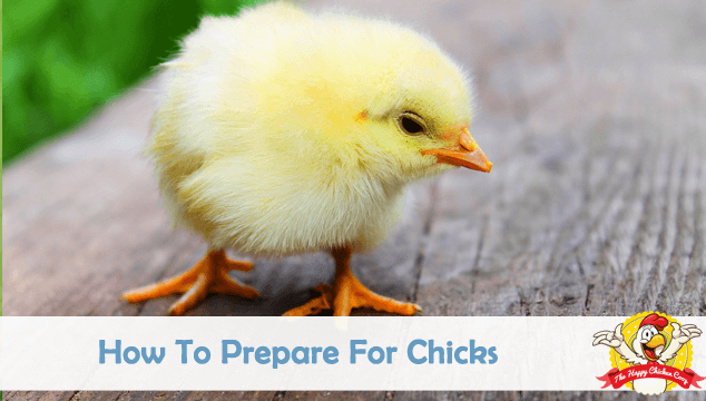 How To Prepare For Chicks Blog Cover