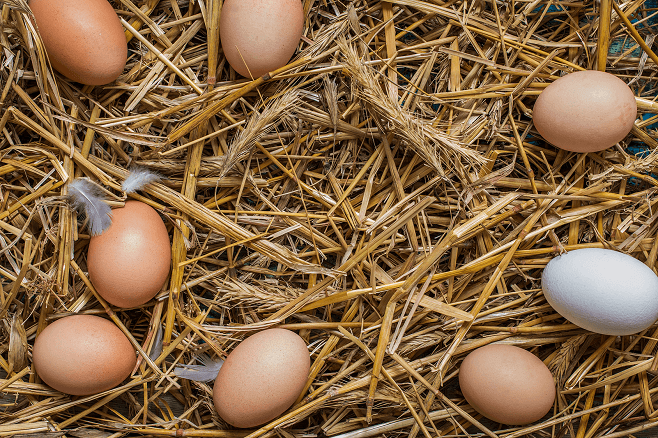 how to get chickens to lay more eggs