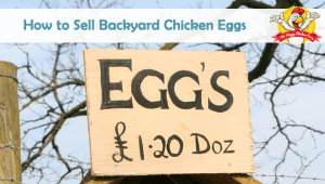 How to Sell Backyard Chicken Eggs