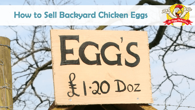 How to Sell Backyard Chicken Eggs Blog Cover