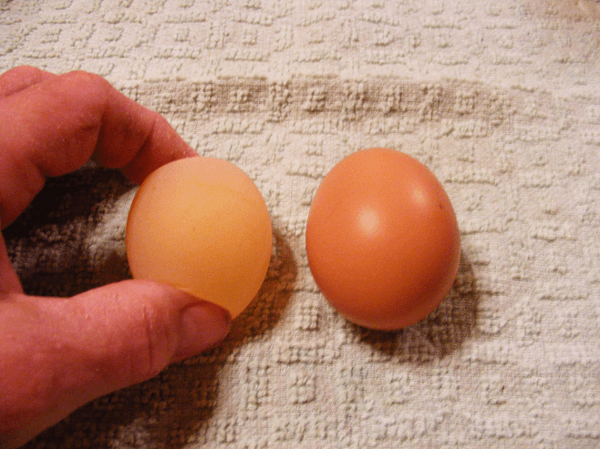 Egg Without Shell
