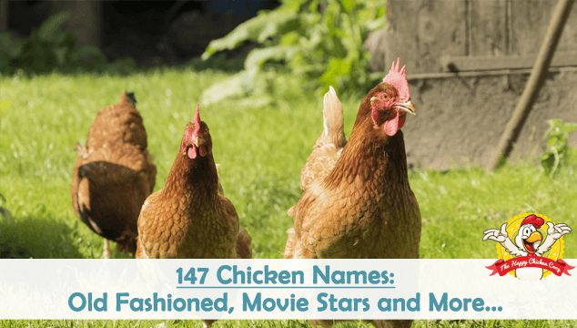 147 Chicken Names Old Fashioned, Movie Stars and More Blog Cover