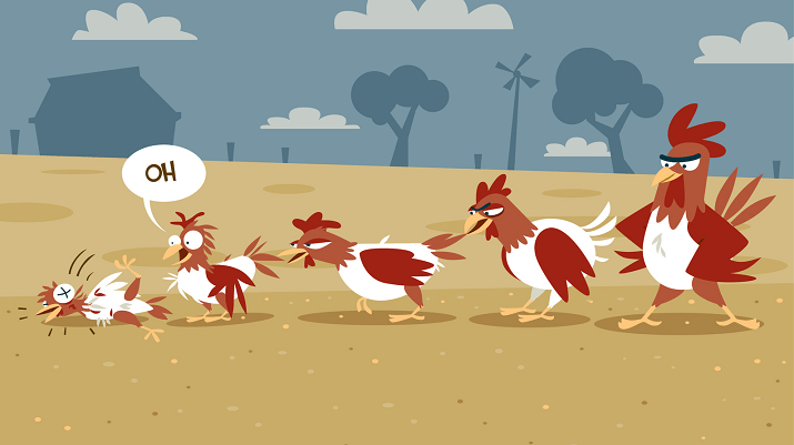 Chicken Bullying Behavior