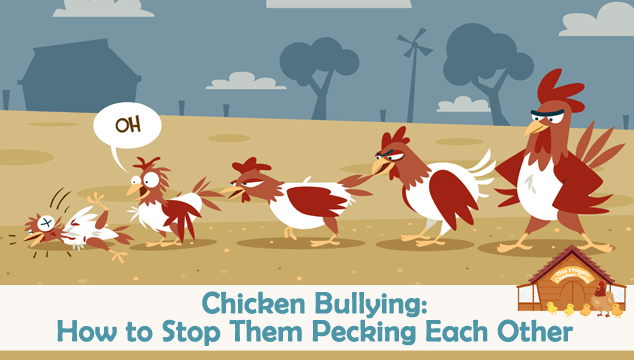 Chicken Bullying: How to Stop Them Pecking Each Other