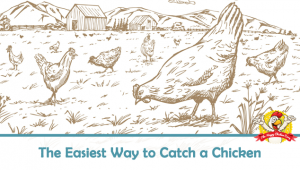 The Easiest Way to Catch a Chicken