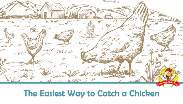 The Easiest Way to Catch a Chicken Blog Cover