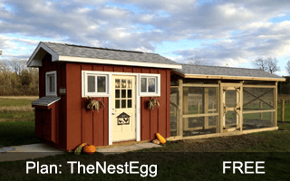 The Nest Egg