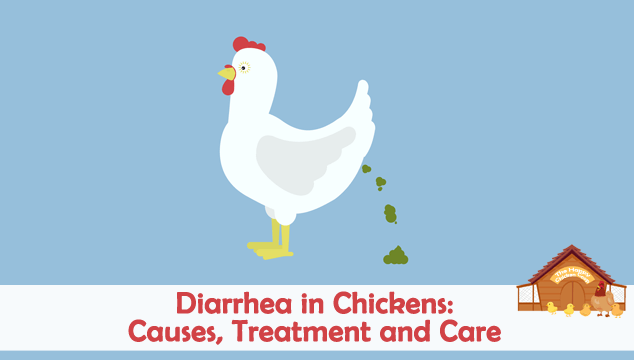 Diarrhea in Backyard Chickens Causes, Treatment and Care Blog Cover