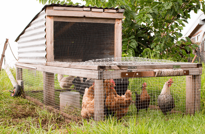 Chicken Tractor Example