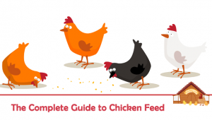 The Complete Guide to Chicken Feed