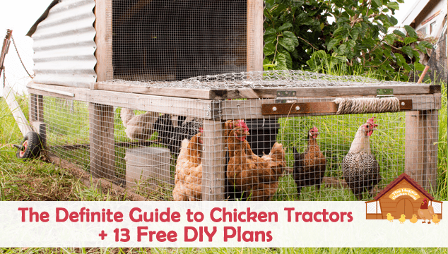 The Definite Guide to Chicken Tractors and 13 Free DIY Plans Blog Cover