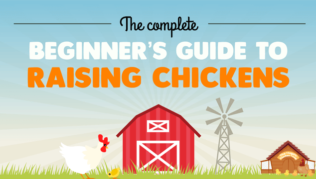 Beginner's Guide to Raising Backyard Chickens Blog Cover
