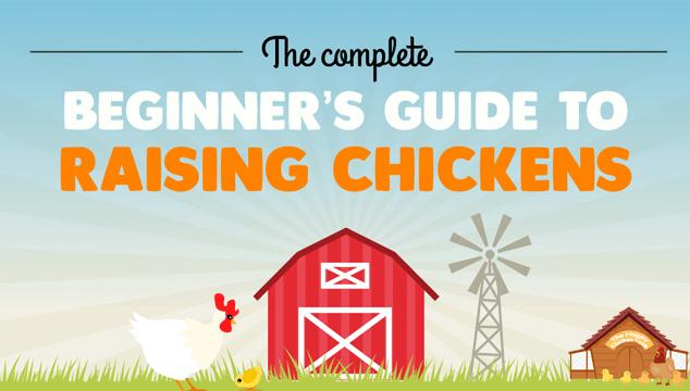 Beginner's Guide to Raising Backyard Chickens Blog Cover