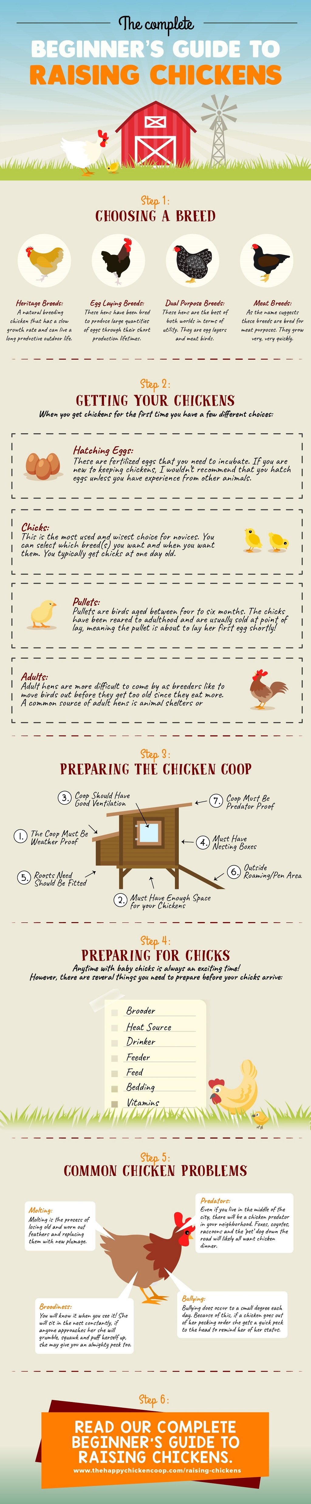 Beginners Guide to Raising Backyard Chickens Small Infographic - Beginner's Guide To Raising Backyard Chickens