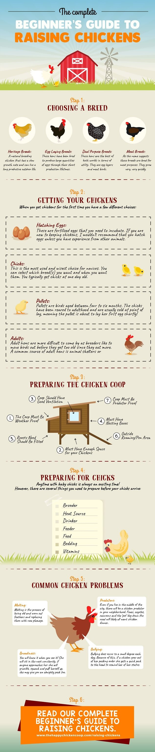 Beginners Guide to Raising Backyard Chickens Small Infographic