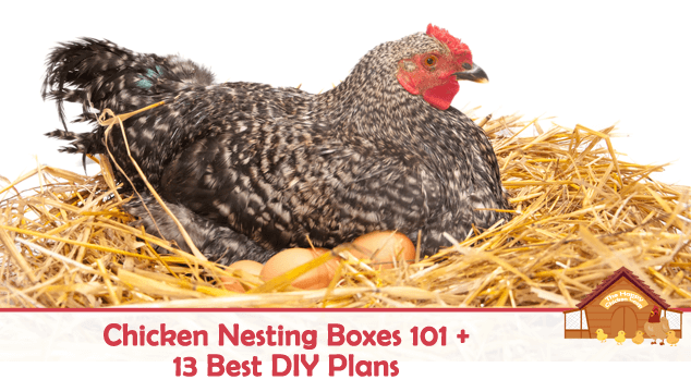 Chicken Nesting Boxes 101 and 13 Best DIY Plans Blog Cover