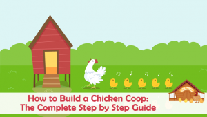 Can Chickens Fly? 5 Myths Debunked