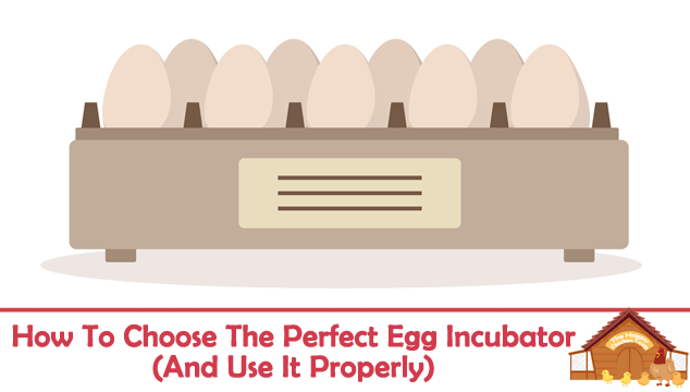 How To Choose The Perfect Egg Incubator Blog Cover