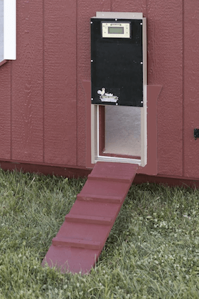 Automatic Chicken Coop Door What To Know Before Buying