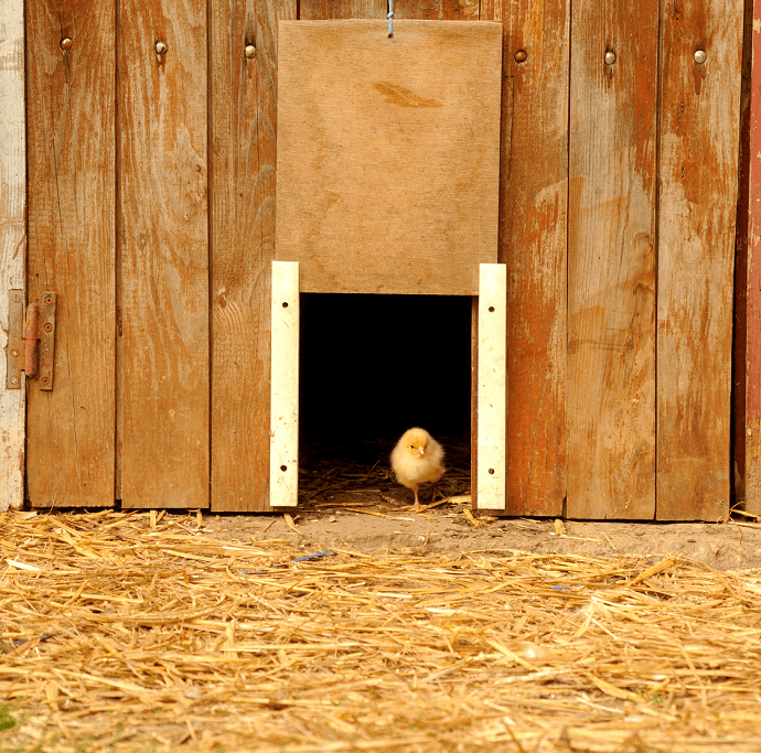 Sliding Chicken Door