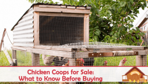 Chicken Coops for Sale: What to Know Before Buying